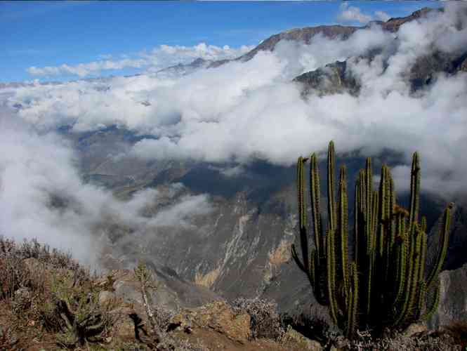 COLCA CANYON / FLOGHT OF THE CONDORS/ PUNO